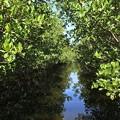 Photos: Mangroves I 1-20-21