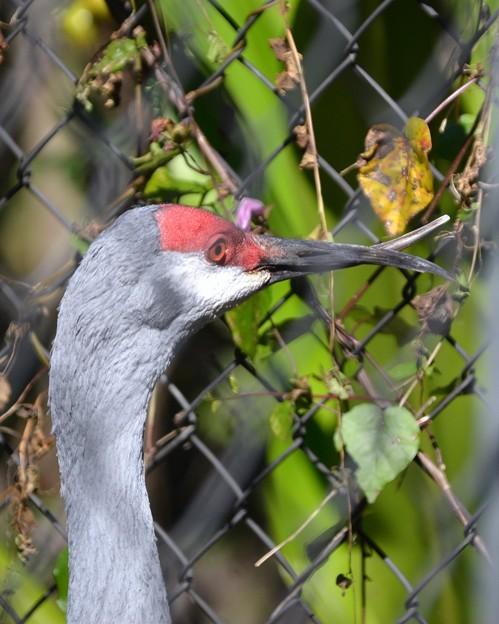 His Beaks 1-20-21