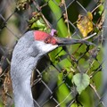 Photos: His Beaks 1-20-21