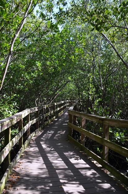 Mangroves II 1-20-21
