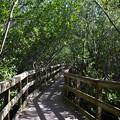 Photos: Mangroves II 1-20-21