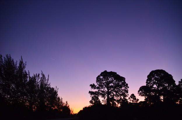 Photos: Purple Dawn 1-21-21