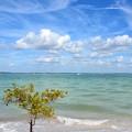 The Beach II 2-10-21