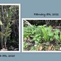 Photos: Cactus Regeneration 2-8-21