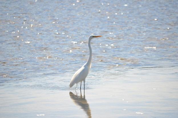 Great Egret I 2-10-21
