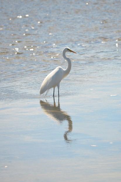 Photos: Great Egret III 2-10-21