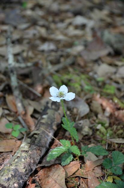 Southern Dewberry I 2-18-21