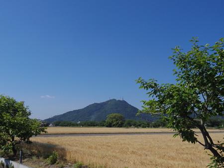 快晴の麦秋の田園風景