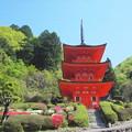 写真: ツツジ咲く美作長福寺