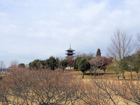 菜の花の備中国分寺