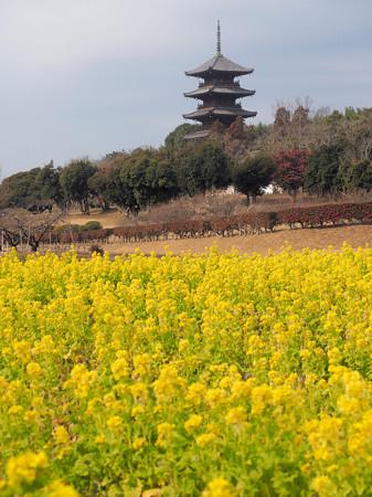 菜の花と備中国分寺五重塔