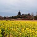 Photos: 早春の備中国分寺五重塔