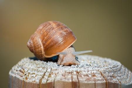 snail-1510367_640