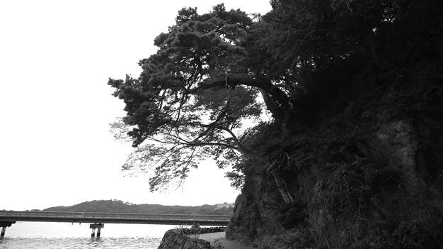 Photos: 松島