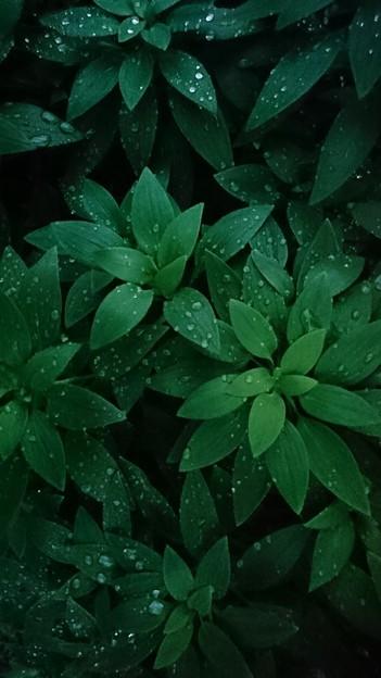 Photos: 雨の水晶・緑の安堵