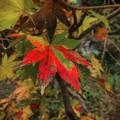 Photos: 残り秋