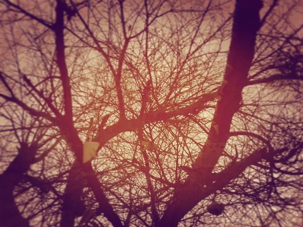 散り銀杏【autumn rise】スマホフィルターversion