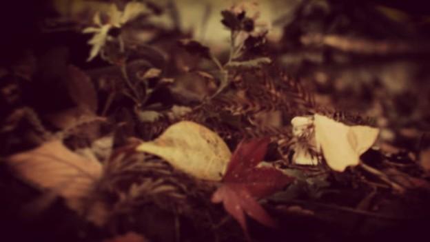小さな小さな秋