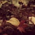 Photos: 小さな小さな秋