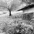 Photos: 雪国の一風景