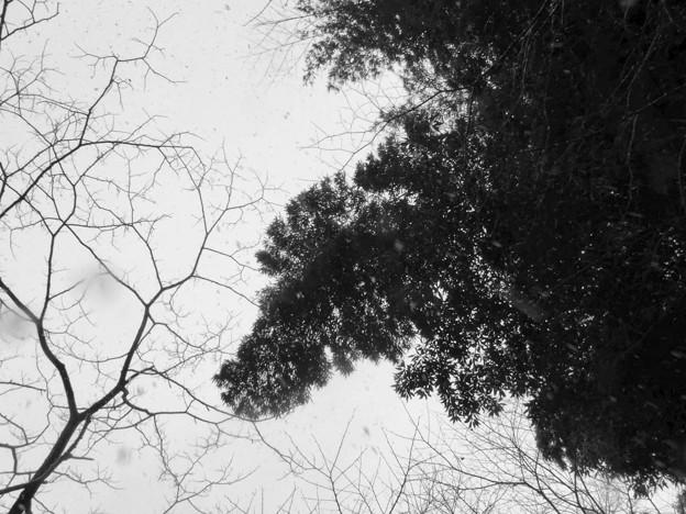 cold sky