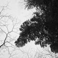 Photos: cold sky