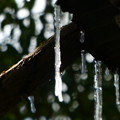 Photos: 凍り