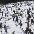 Photos: 雪の地