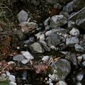 Photos: 小さな流れ  山水