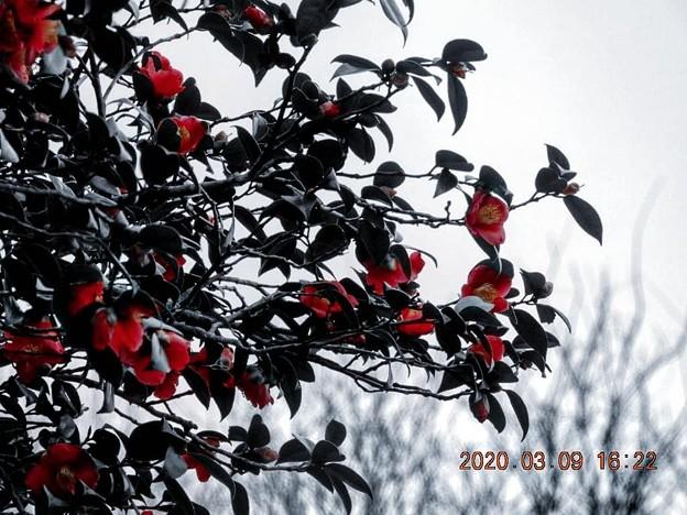 セレクトカラー 赤