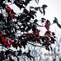 Photos: セレクトカラー 赤