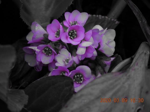 セレクトカラー 紫