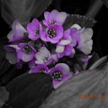 Photos: セレクトカラー 紫
