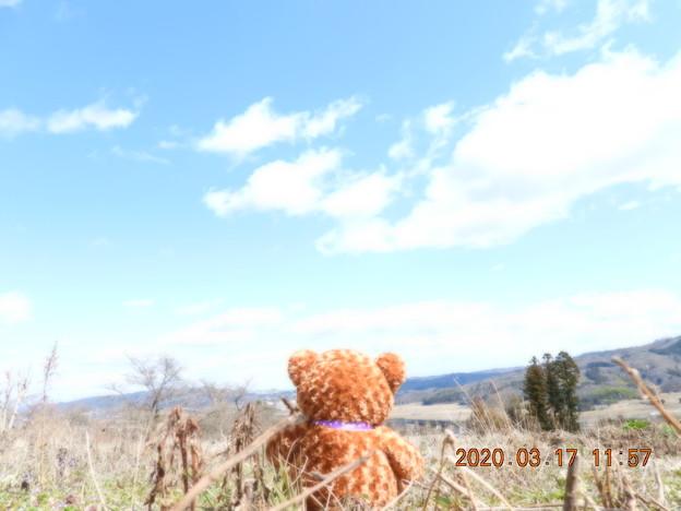 Photos: くまと行く? 4