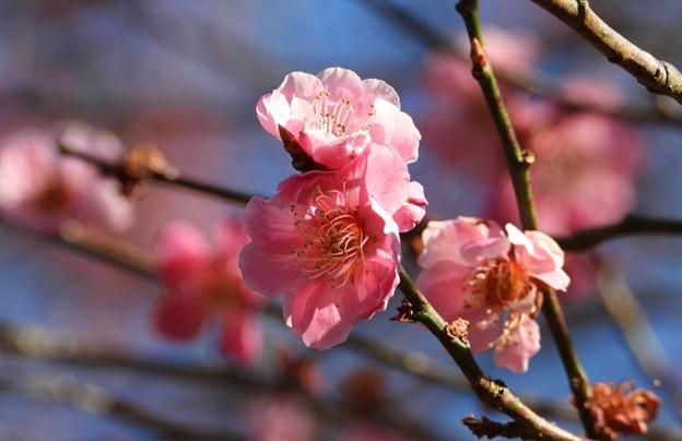 春色始まる