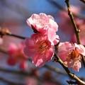Photos: 春色始まる