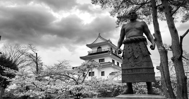 桜日和の白石城