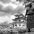 Photos: 桜日和の白石城