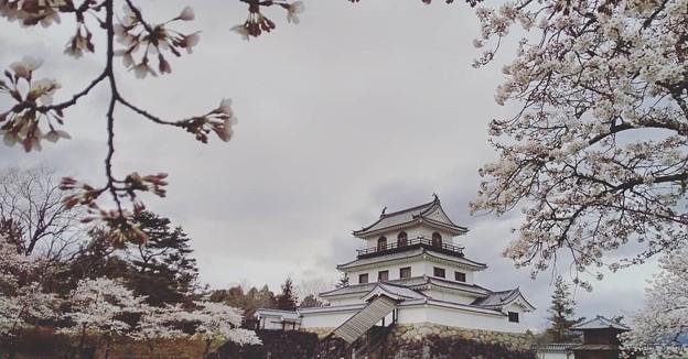 Photos: 桜日和の白石城    其の弐
