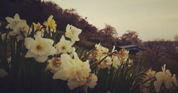 春香る丘から