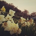Photos: 春香る丘から
