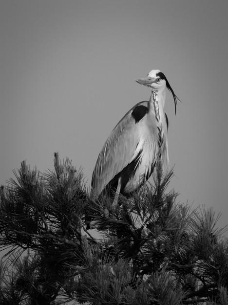 Photos: 翼の魅了