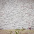 水辺のメランコリック