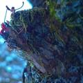 Photos: クモとキンモクセイ
