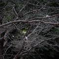 Photos: 馬牛沼の十月桜