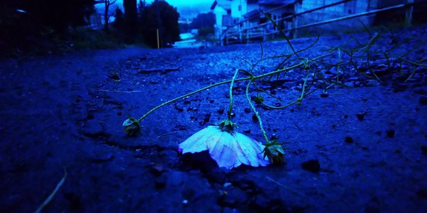 秋雨に打たれて
