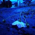Photos: 秋雨に打たれて