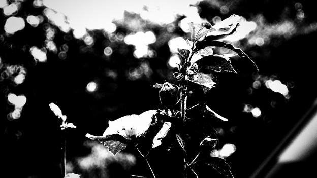 白黒の魅力