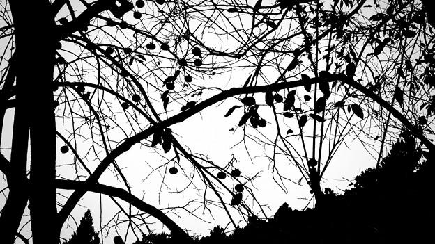 秋のシルエット