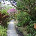 Photos: 山の茶屋楽水